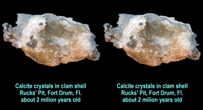 Calcite crystals in clam shell - Rucks' Pit, Fort Drum, Fl., about 2 milion years old